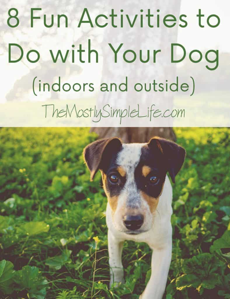 fun activities to do with your dog feature