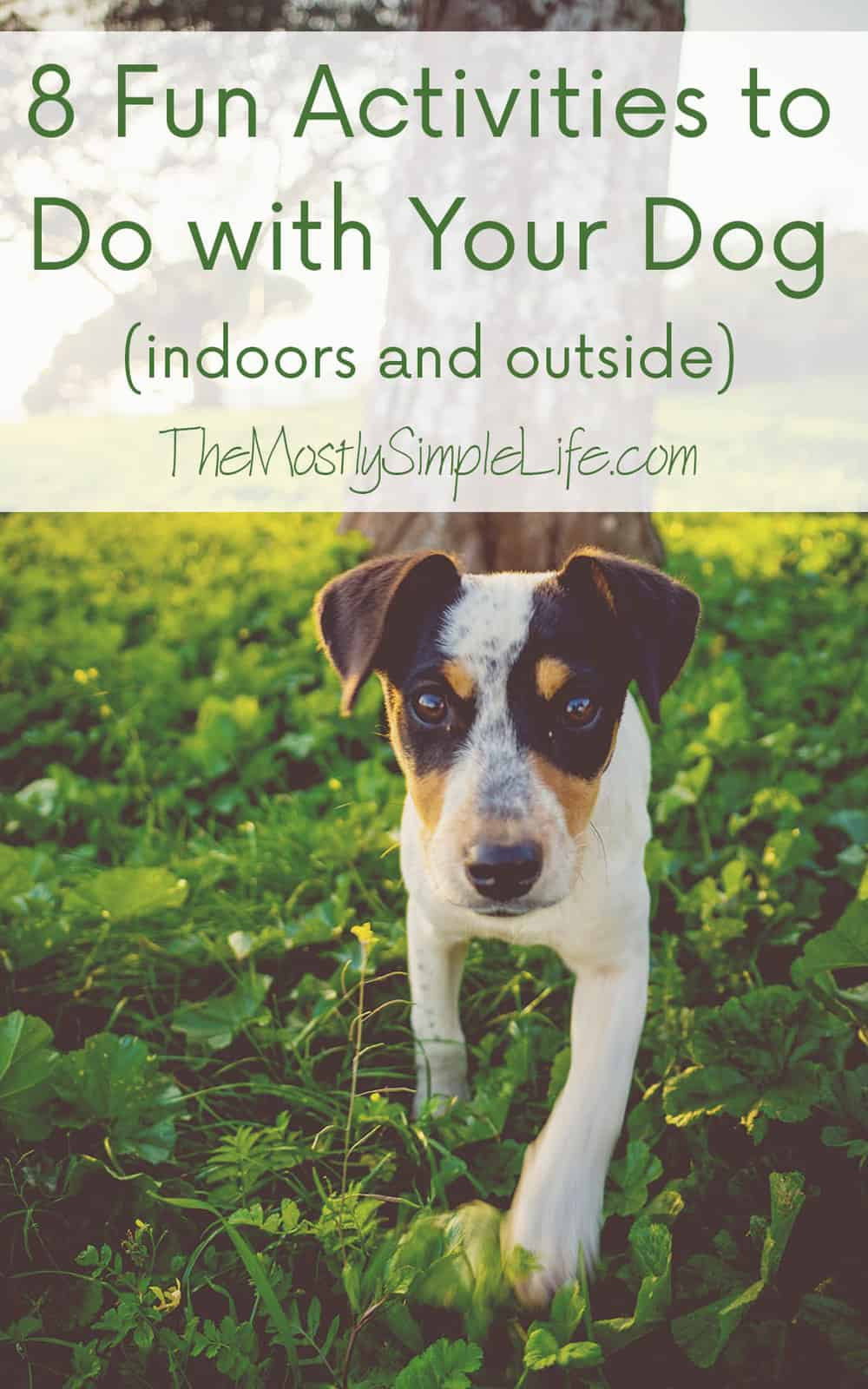 8 fun activities to do with your dog the mostly simple for Minimalist living with pets