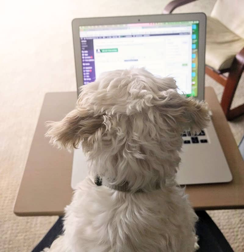 Invest in yourself! Pic of dog blogging.